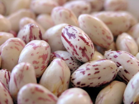 Cranberry Beans